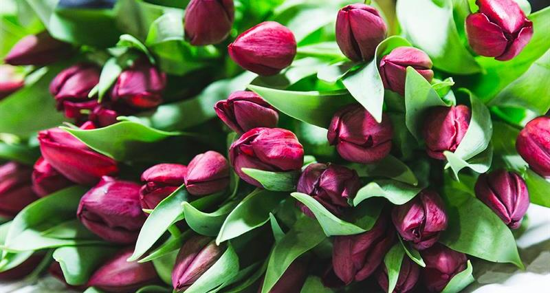 Britain's best spring flowers
