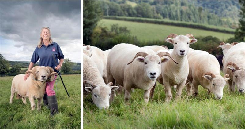 Meet the British wool makers