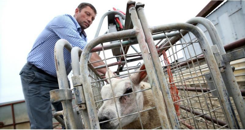 NFU Livestock Board chairman  Richard Findlay_56584