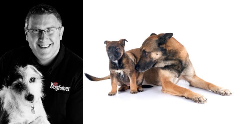 The Dogfather Graeme Hall_58319
