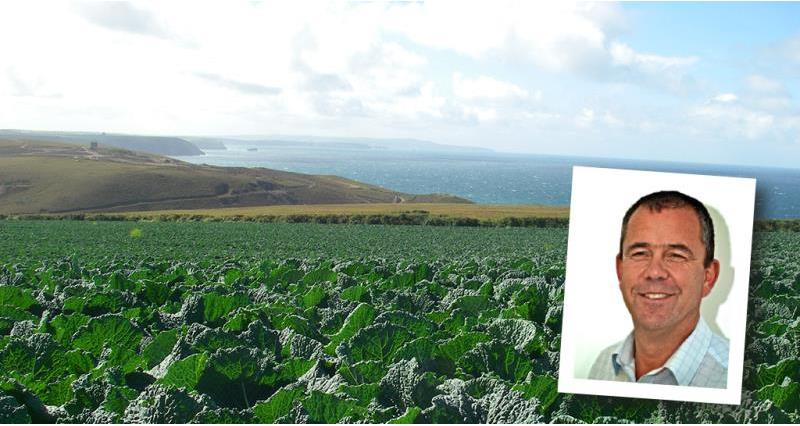 Find out about growing cabbages