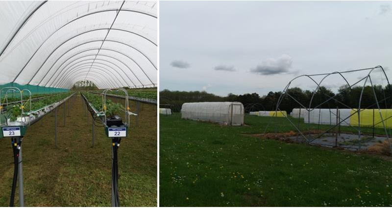 tour of NIAB site in Kent_53980