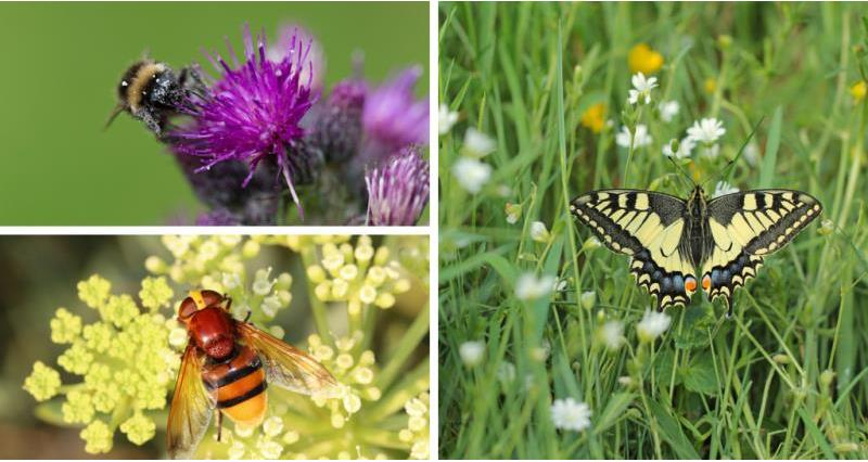 What do farmers do to meet bees needs and encourage pollinating insects?