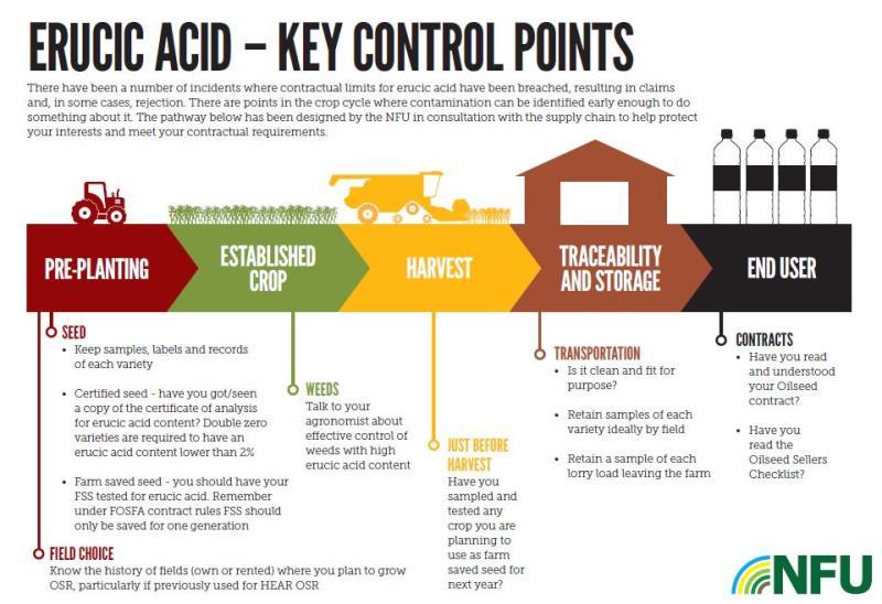 Erucic acid infographic_50248
