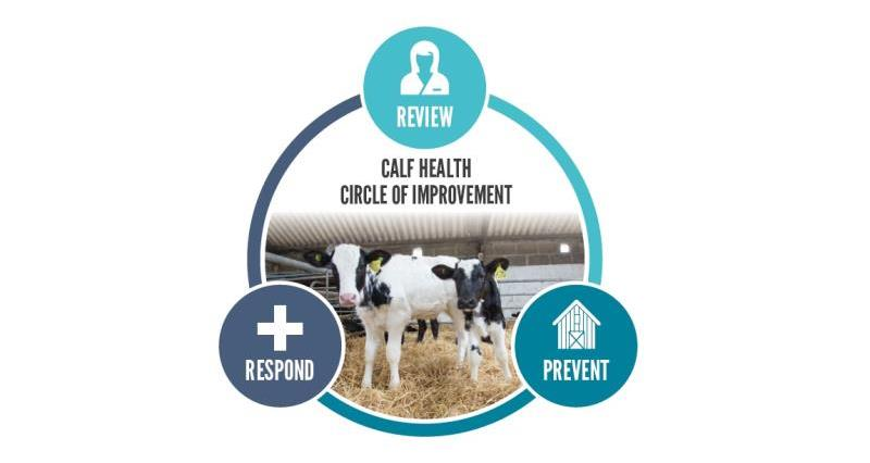 calf health circle of improvement_57773