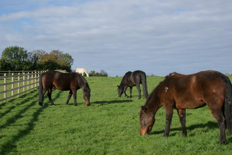 Horses_30751