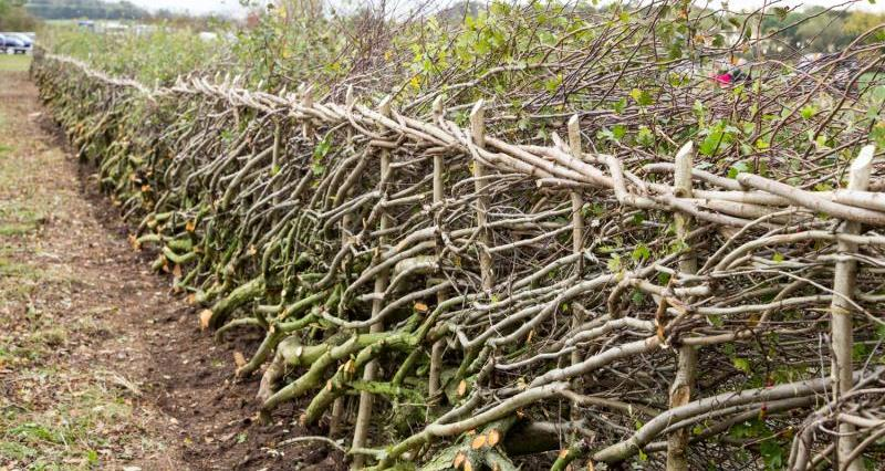 Image result for hedgerows and boundaries grant images