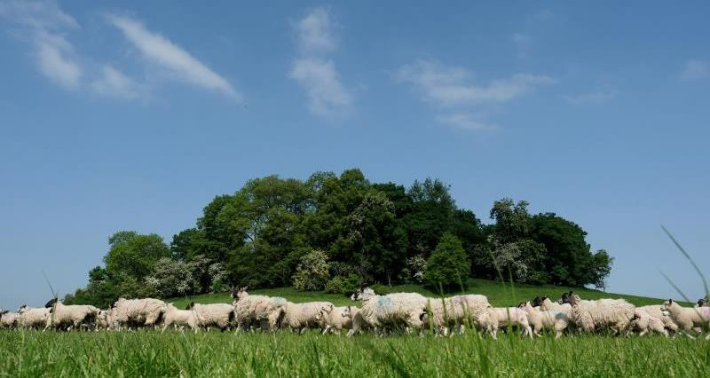 NFU win on sheep splitting rules could save industry millions