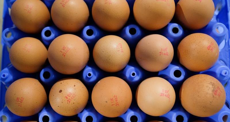 Find out about the British egg sector