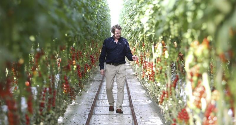 Meet one of the UK's leading tomato growers