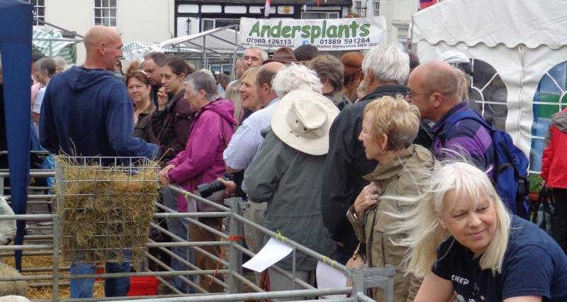 Ashbourne Sheep Fair 2016, Sheep breeds display_36089