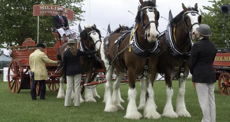 Heavy Horse class, Nottinghamshire County  Show_53027