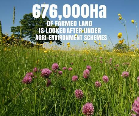 Environmental Success_45654