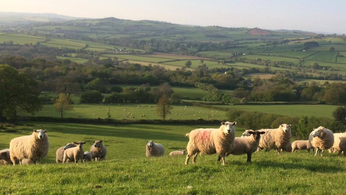 NFU Cymru welcomes Welsh Government statement on future of agriculture and land management