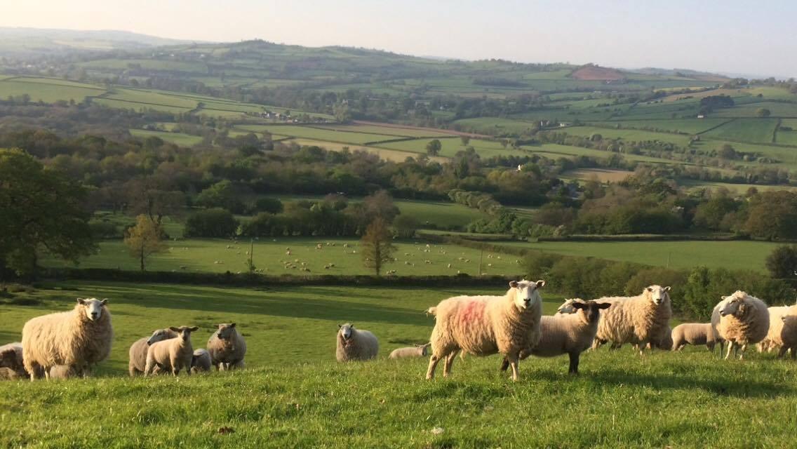 Welsh Landscape_43713