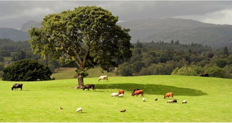 The livestock industry - your questions answered