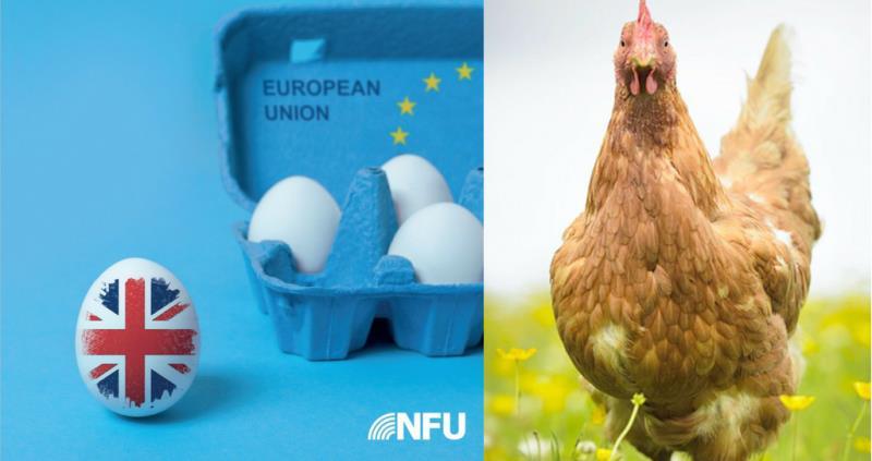 Poultry Brexit Impact_56842