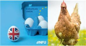 Brexit and the UK poultry sector