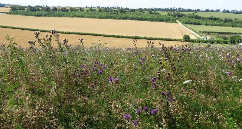 CFE Pollinators 7 July_45163