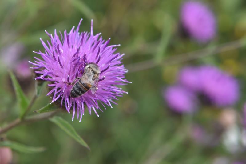 CFE Business Benefits of Pollinators RAU Cirencester_45249