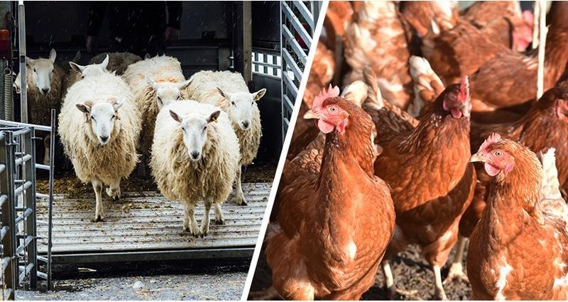 NFU submits response to Welfare in Transport consultation