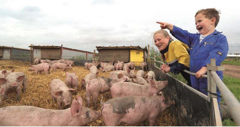 Meet the pig farmer