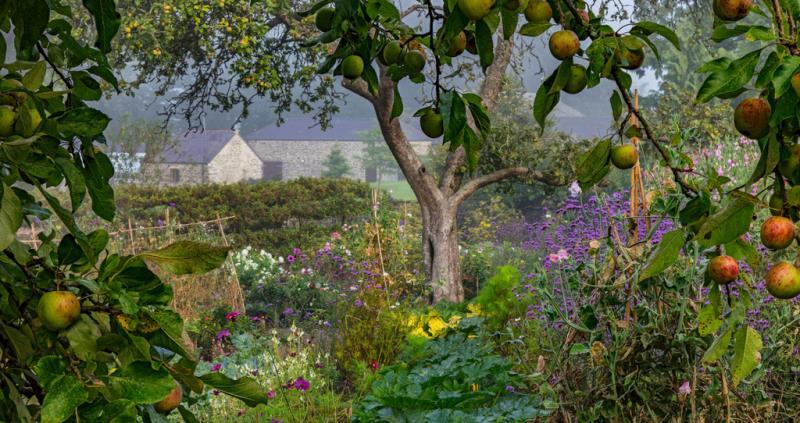 International Garden Photographer of the Year entrant Nigel McCall Bloom flower festival York July 2018_55123