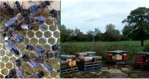 Beekeepers urged to increase security after hives stolen