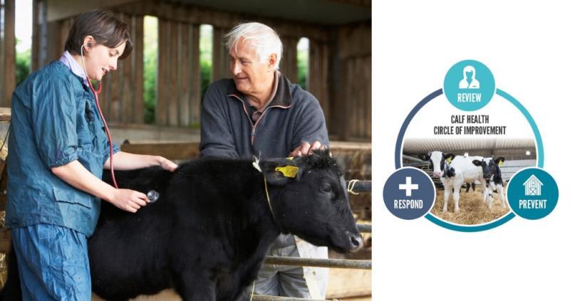 calf health campaign canva composite web dimensions_57885