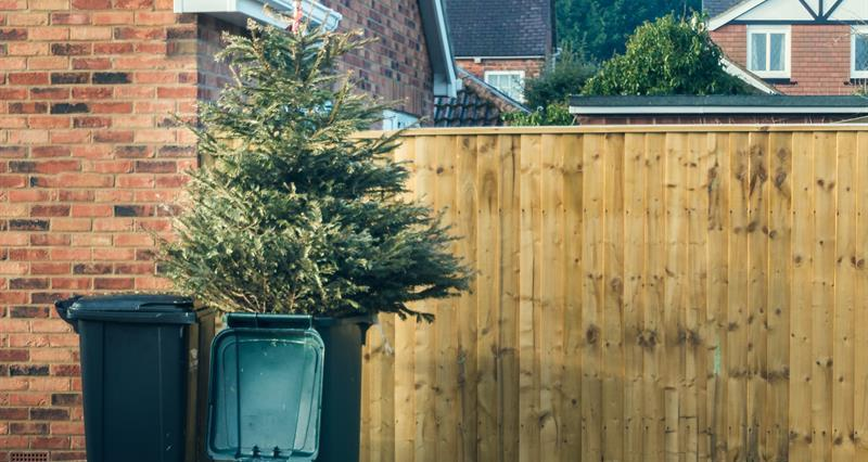 Top tips for disposing of your Christmas tree