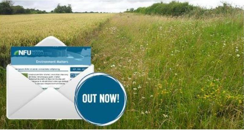 Environment Matters newsletter