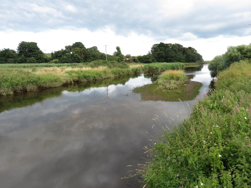 River Otter NFM SW _56057