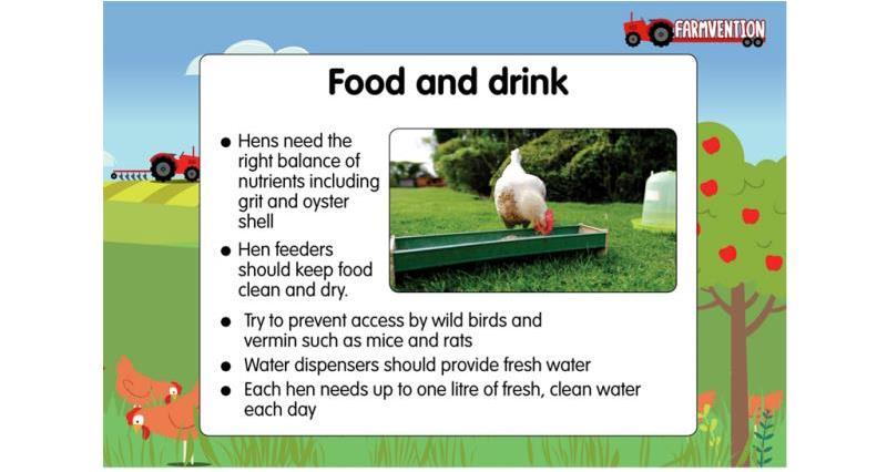 hen food_57626