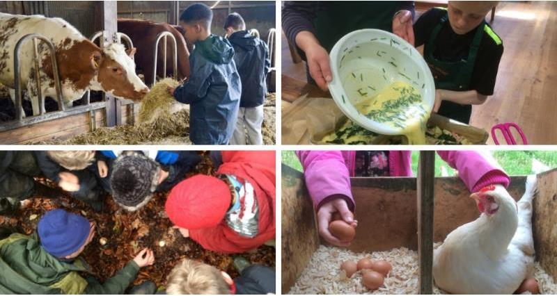 farm project_58332