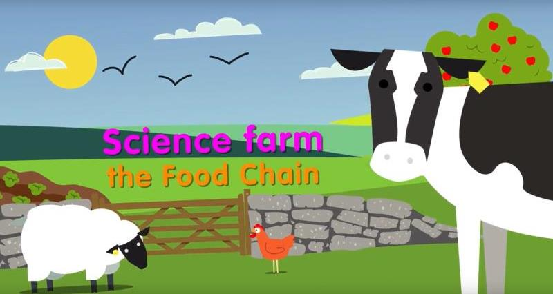 food chains_56976