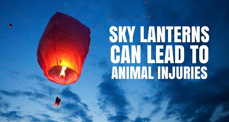 Sky lanterns_48044