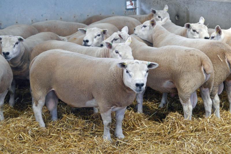 Glos sheep farming day 3_55498
