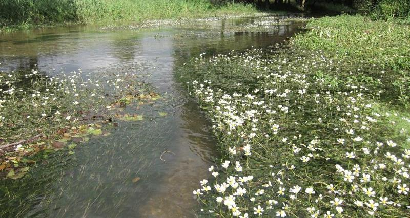 River Mimram_14278