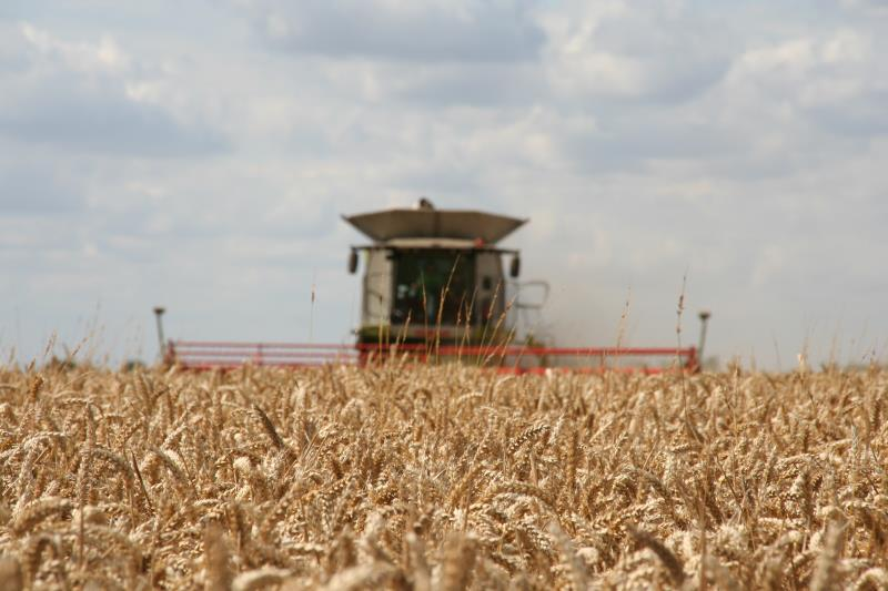 Harvesting wheat at Park Farm, Thorney_17112