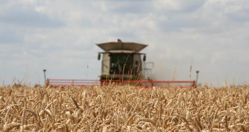 Harvesting wheat at Park Farm, Thorney_17112