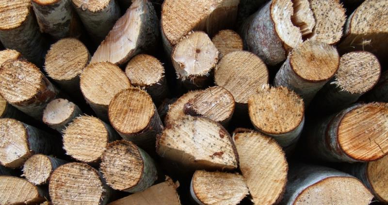 Sawn logs_52424