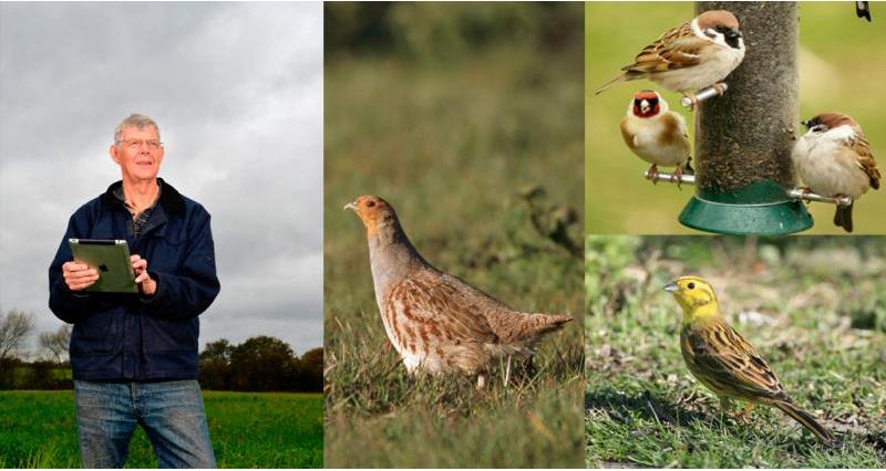 Big Farmland Bird Count starts this Friday