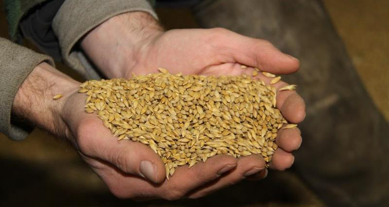 Hands and grain, crops, arable_21608
