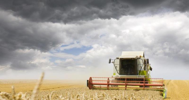 combine on wheat - late august, landscape crop, harves_33146