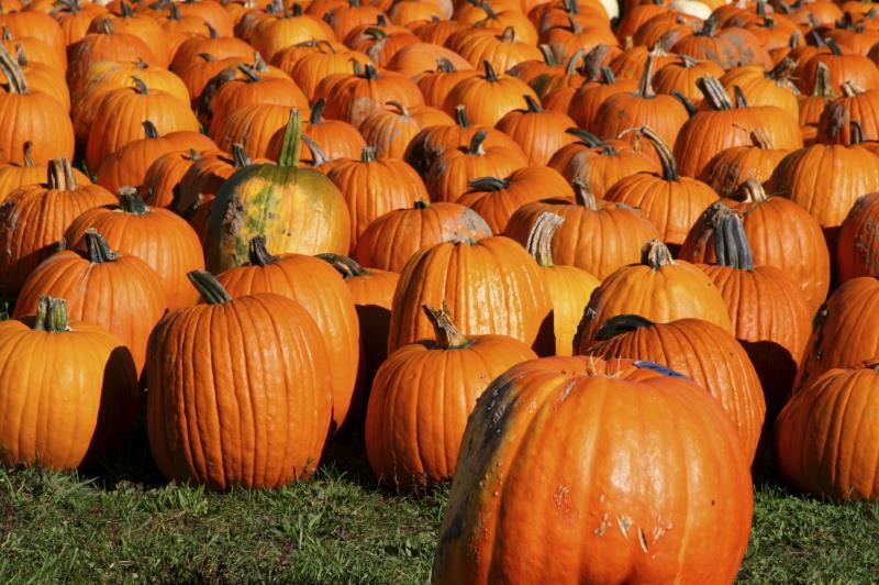 Pumpkins - October_6745