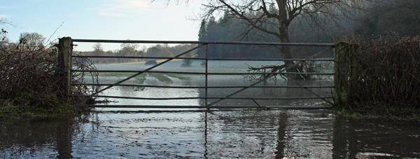 flooded farmland, farmgate, banner image_31546