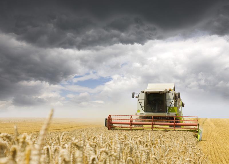 combine on wheat - late august, landscape crop, harvest_33098