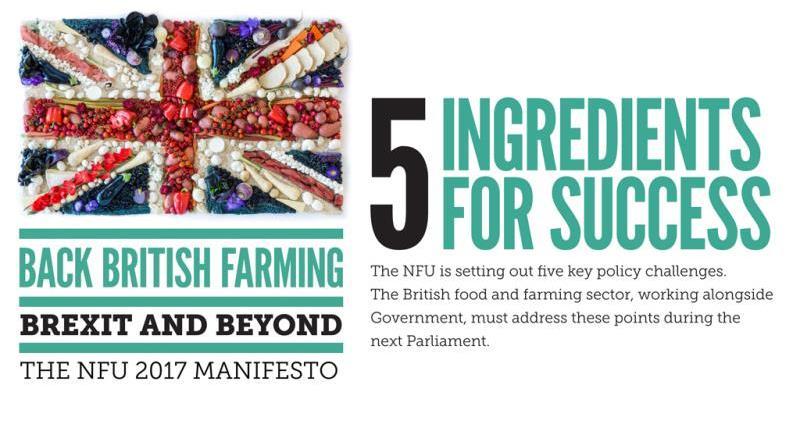 general election manifesto header, plain_43491