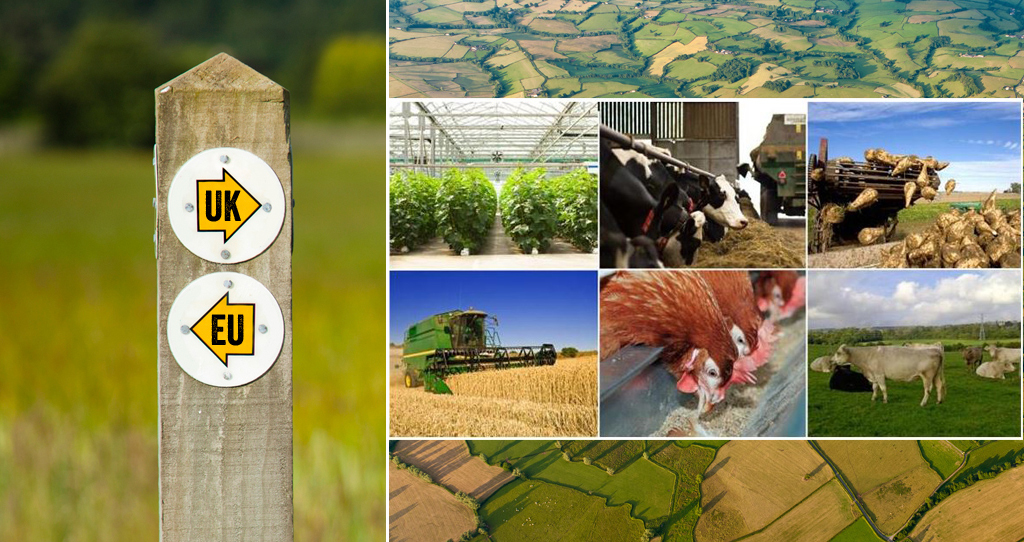 brexit update newsletter, a new domestic agricultural policy - header picture, brexit, article 50, eu_43127