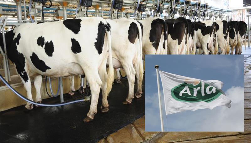 Arla flag and milking parlour, banner crop, milk, cooperative_32758